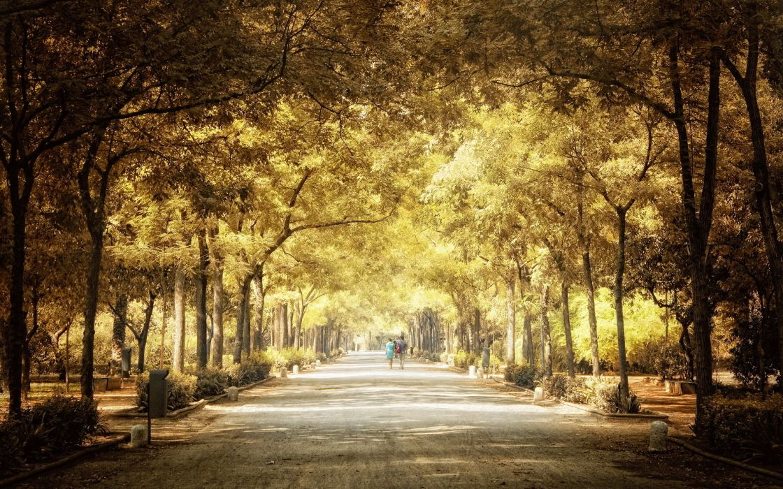 nature trees parks people pathways scenic wallpaper