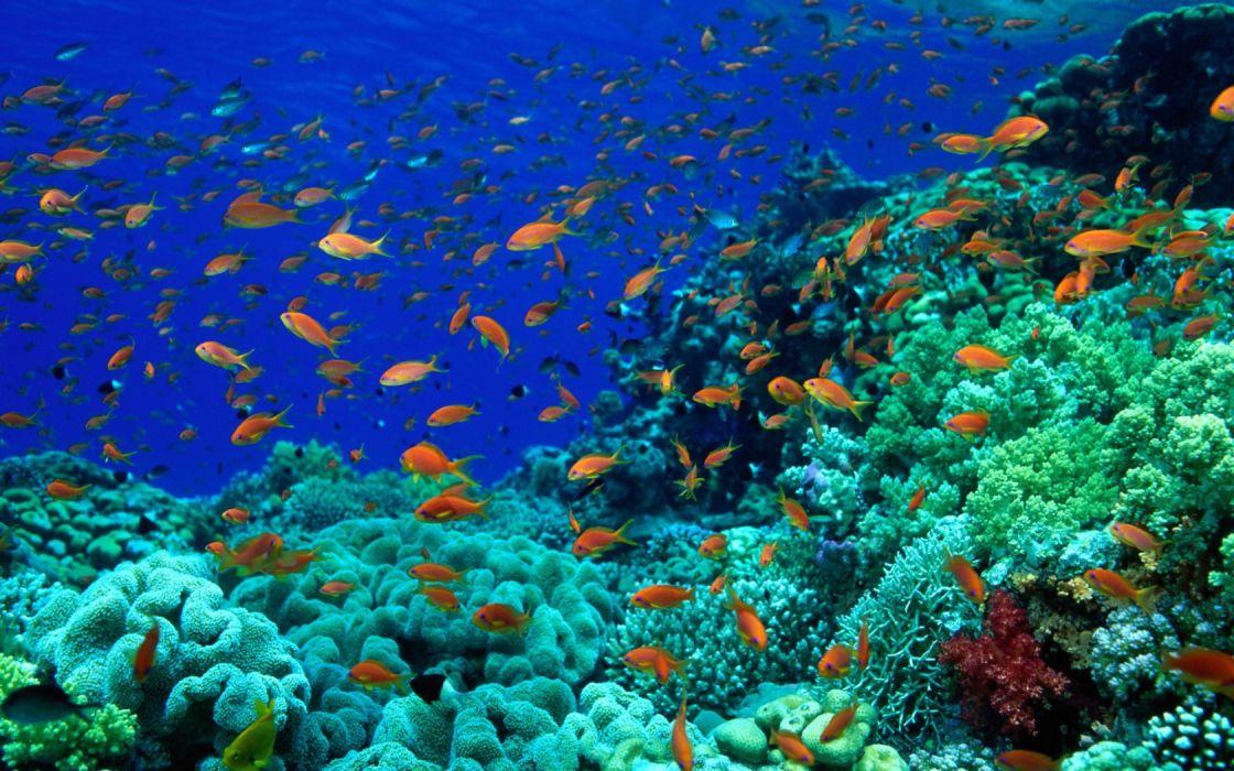 animals fishes underwater oceans seas wallpaper