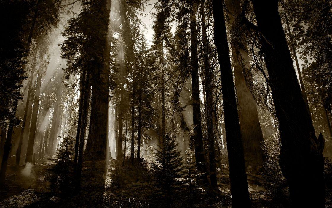 nature trees forest dark fog mist wallpaper