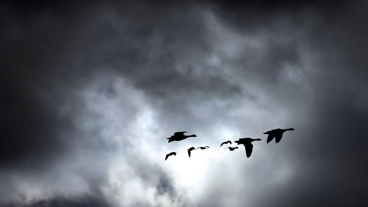 animals birds nature skies clouds wallpaper