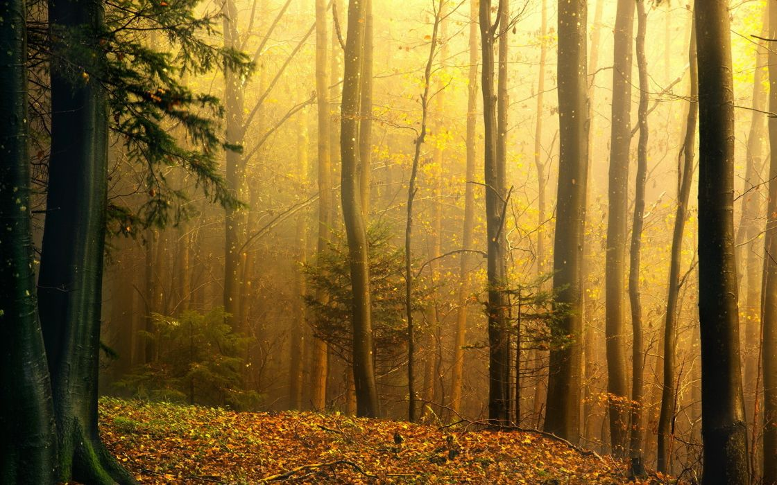 nature trees forest autumn fall seasons wallpaper