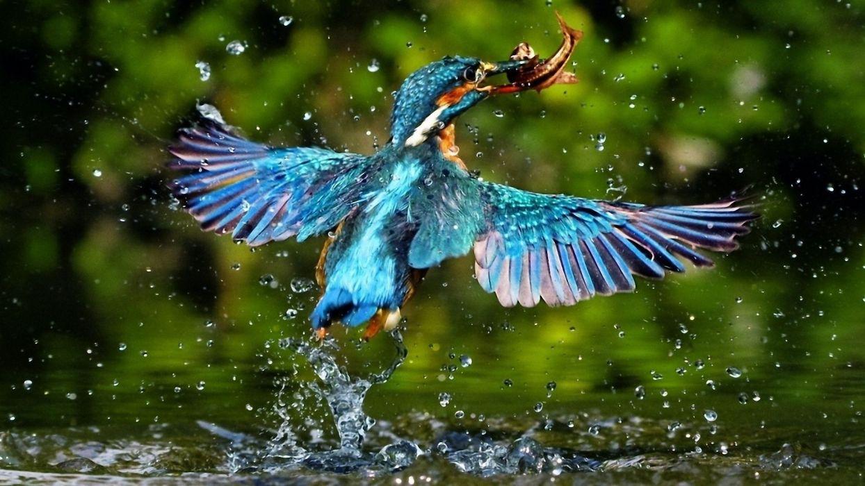 animals birds fishes wallpaper