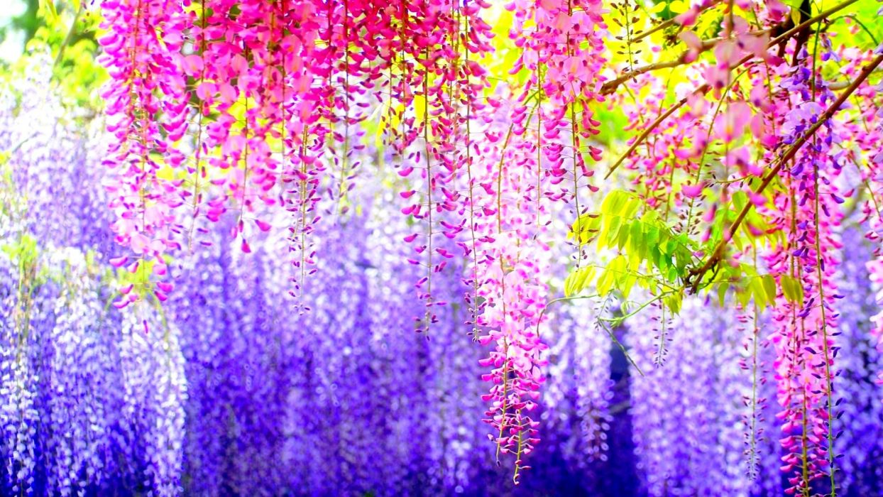 nature flowers blossoms colors trees wallpaper