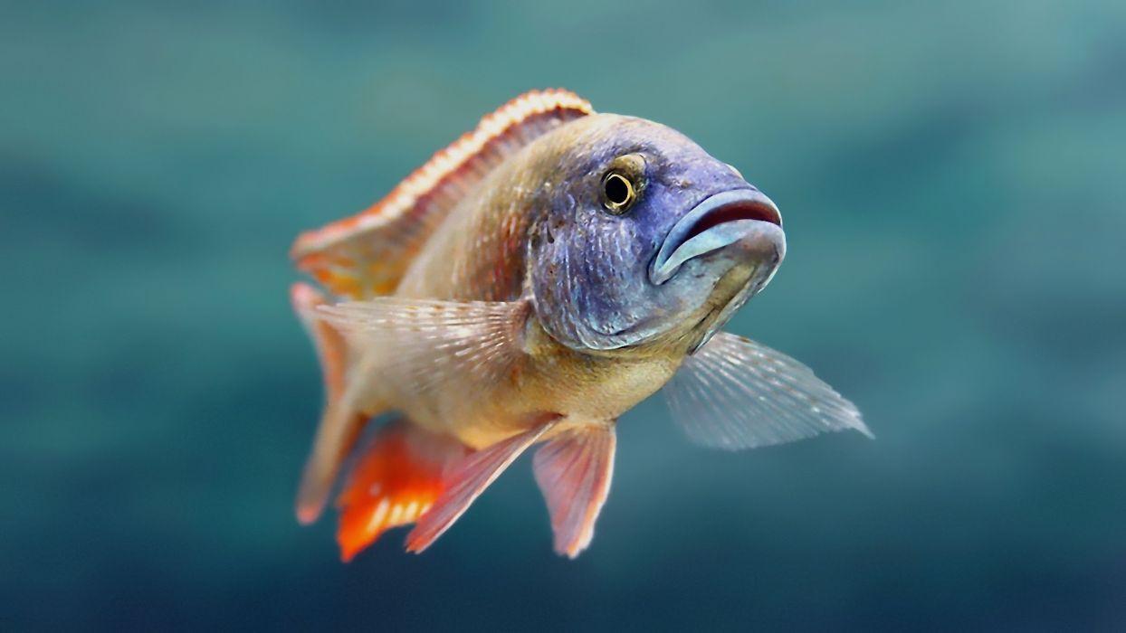 animals fishes underwater wallpaper