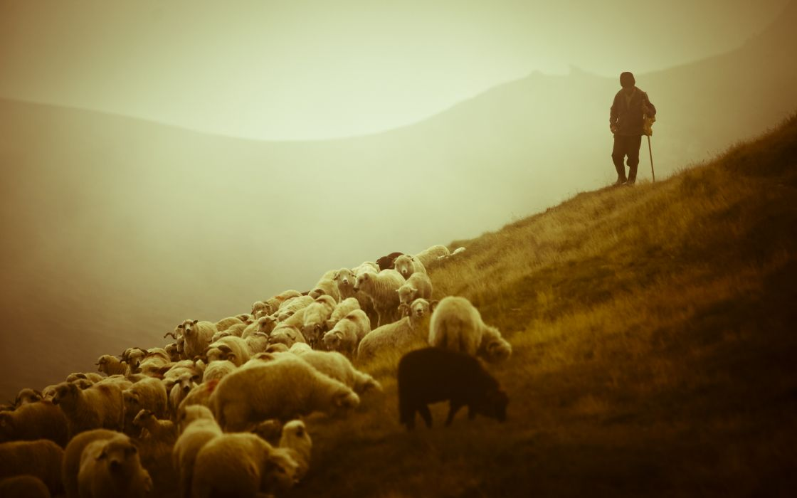 animals sheep landscapes nature people men other-men scenic wallpaper