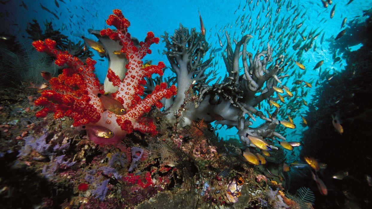 animals fishes underwater sealife oceans wallpaper