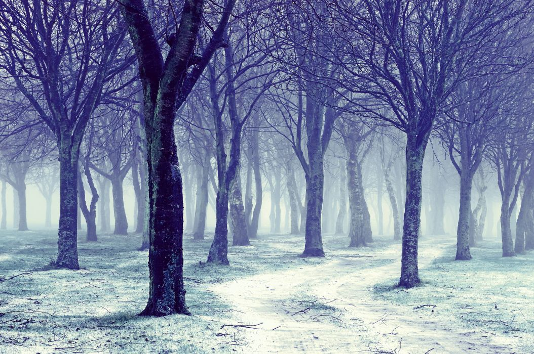 landscapes nature trees forests winter seasons wallpaper