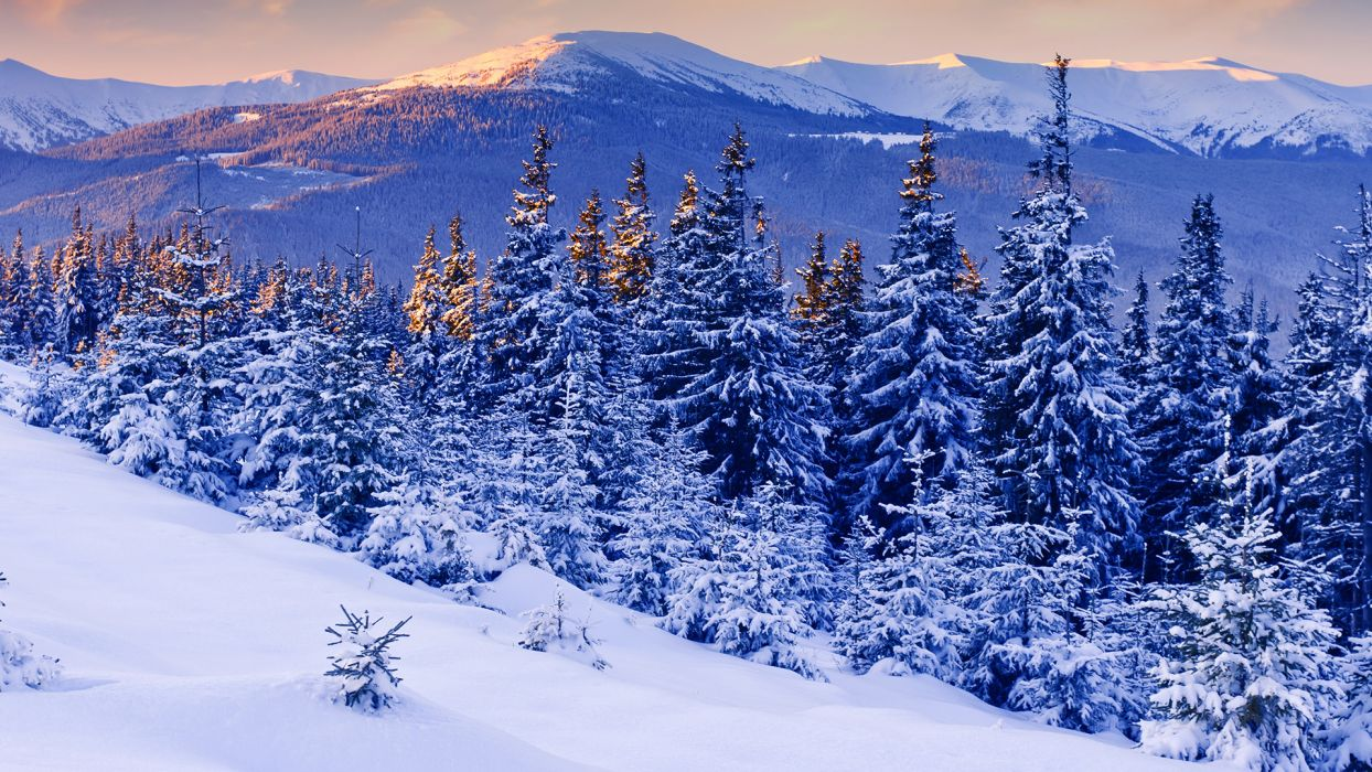 nature landscapes trees forests mountains scenic winter snow seasonal wallpaper