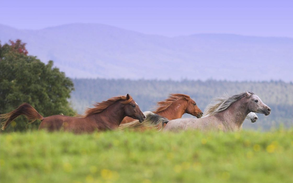 animals horses wallpaper