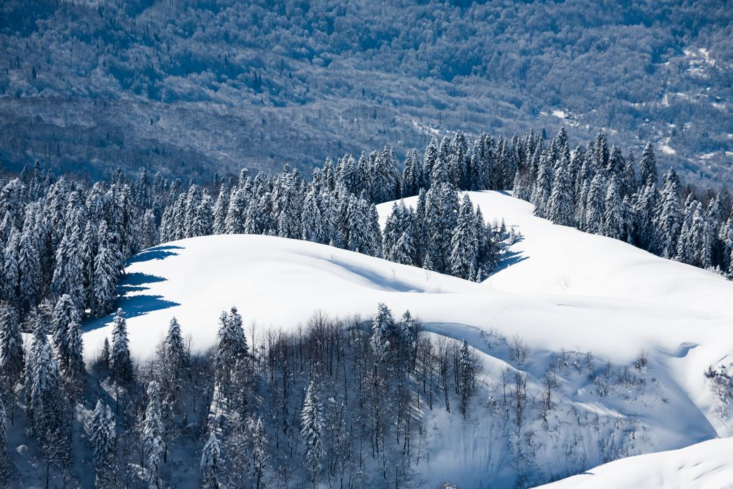 nature winter seasons snow trees forests landscapes wallpaper