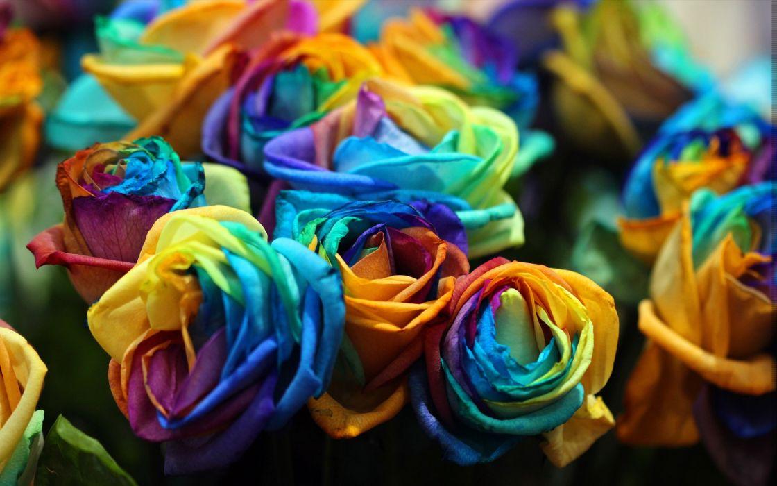 colors nature flowers artistic wallpaper
