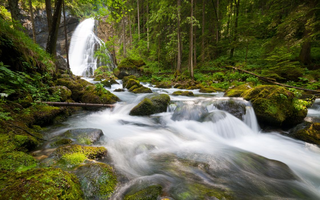 nature landscapes forests trees rivers water wallpaper