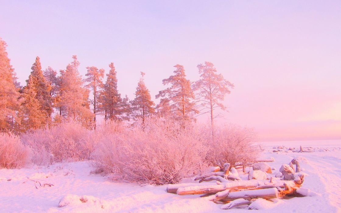 nature winter landscapes trees snow sunrises sunsets wallpaper