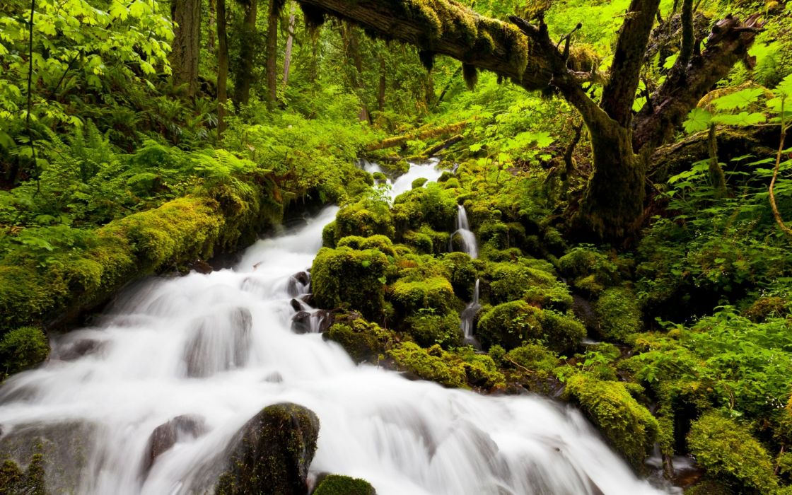 landscapes nature forests jungles rivers streams green water wallpaper