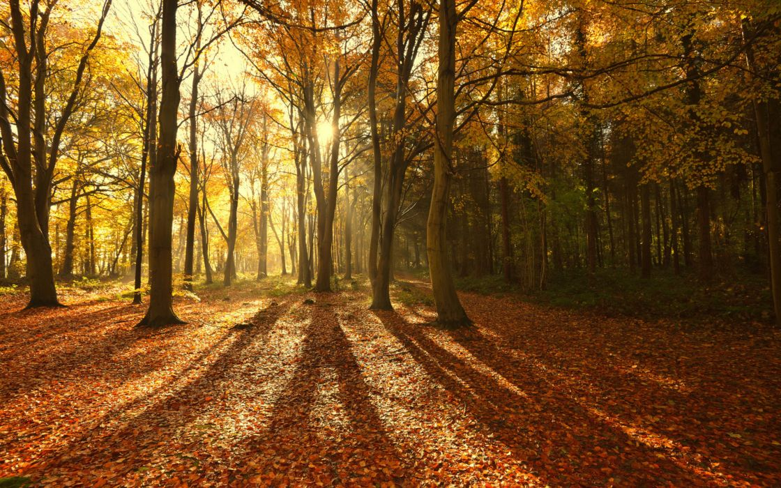 landscapes trees forests autumn fall leaves sunlight sunbeams seasonal wallpaper