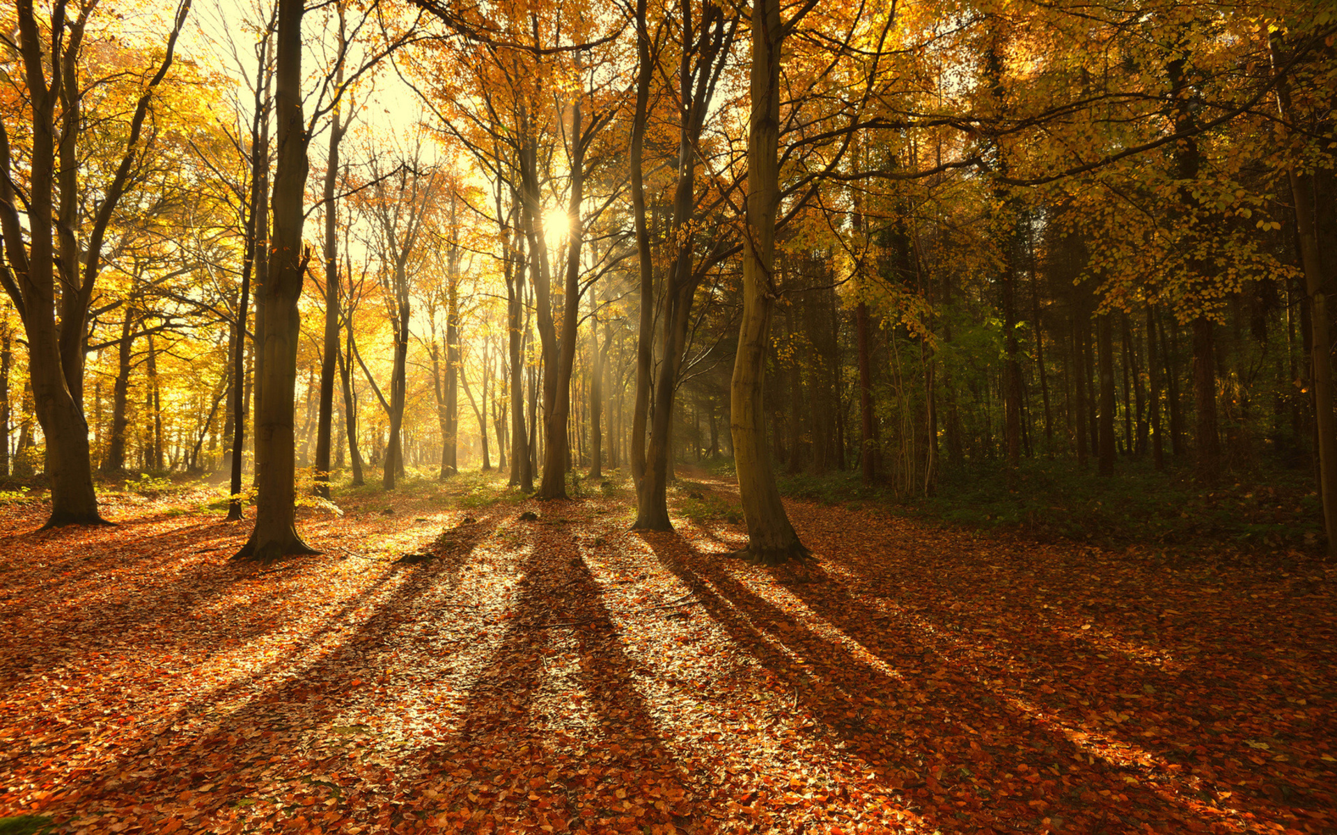 landscapes trees forests autumn fall leaves sunlight sunbeams