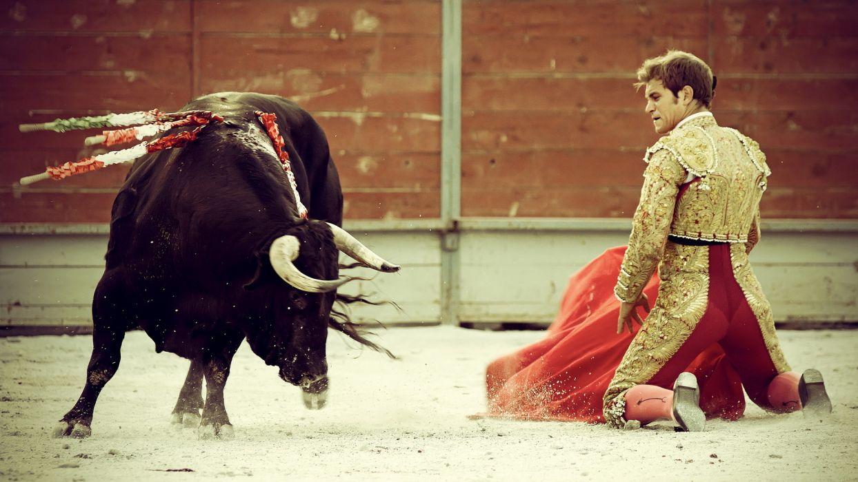 bullfighting people matadores animals cows bulls battles wallpaper