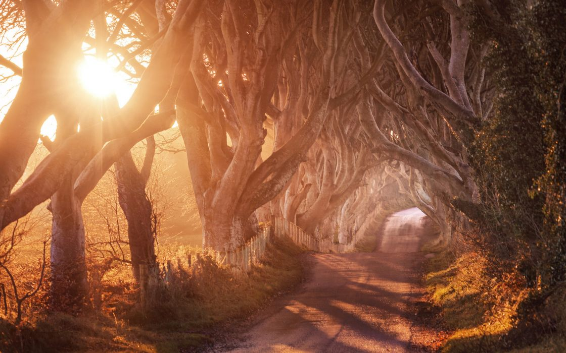trees roads pathways sunrises sunsets nature sunlight wallpaper