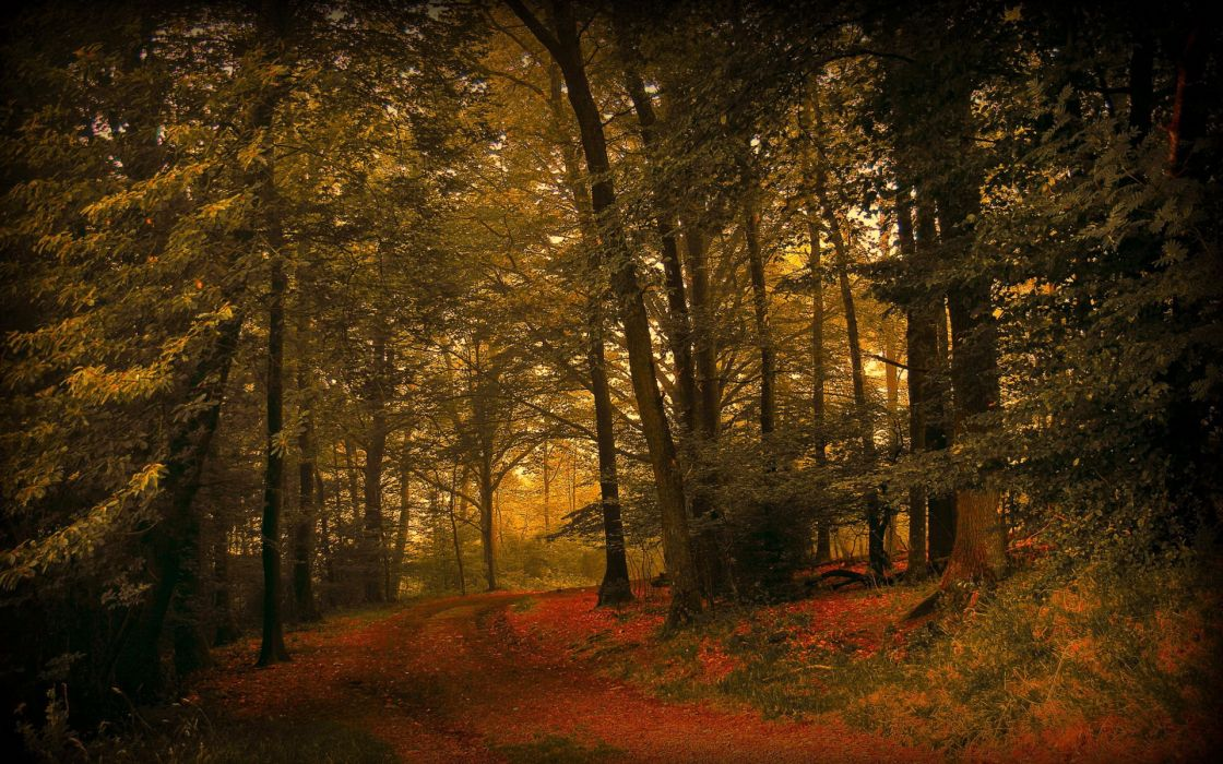 landscapes nature forests woods trees autumn fall seasons wallpaper