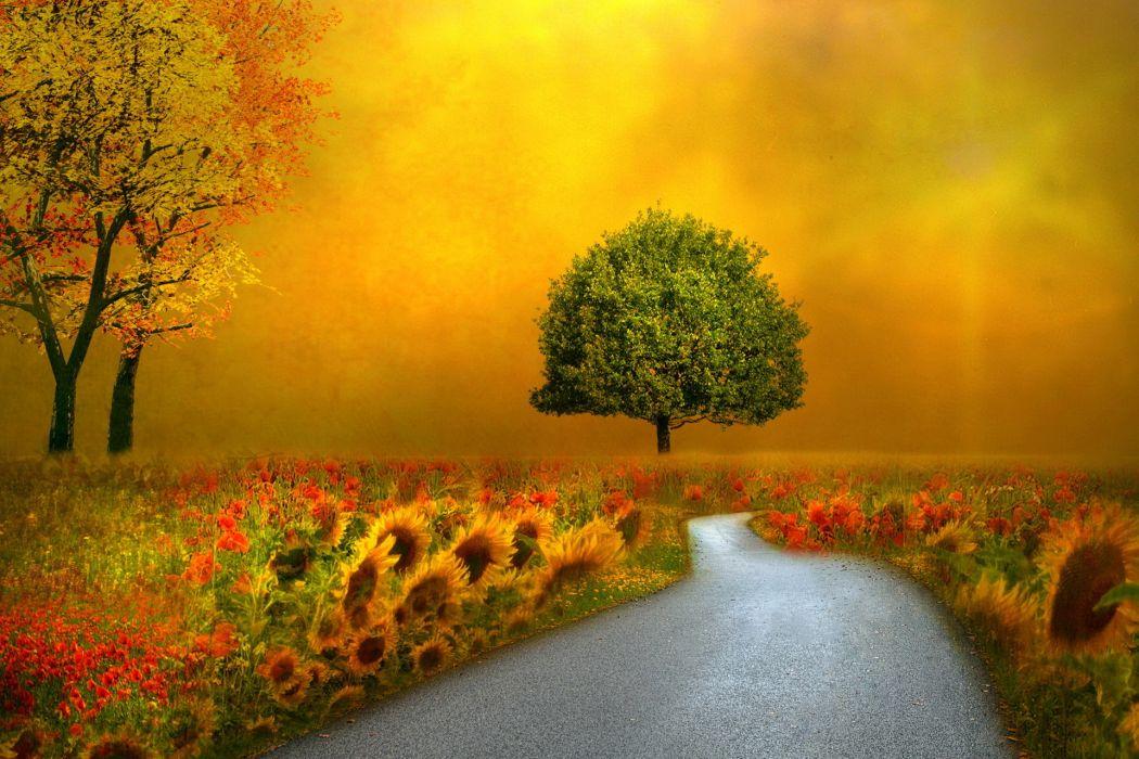landscapes nature autumn fall seasons flowers roads pathways wallpaper