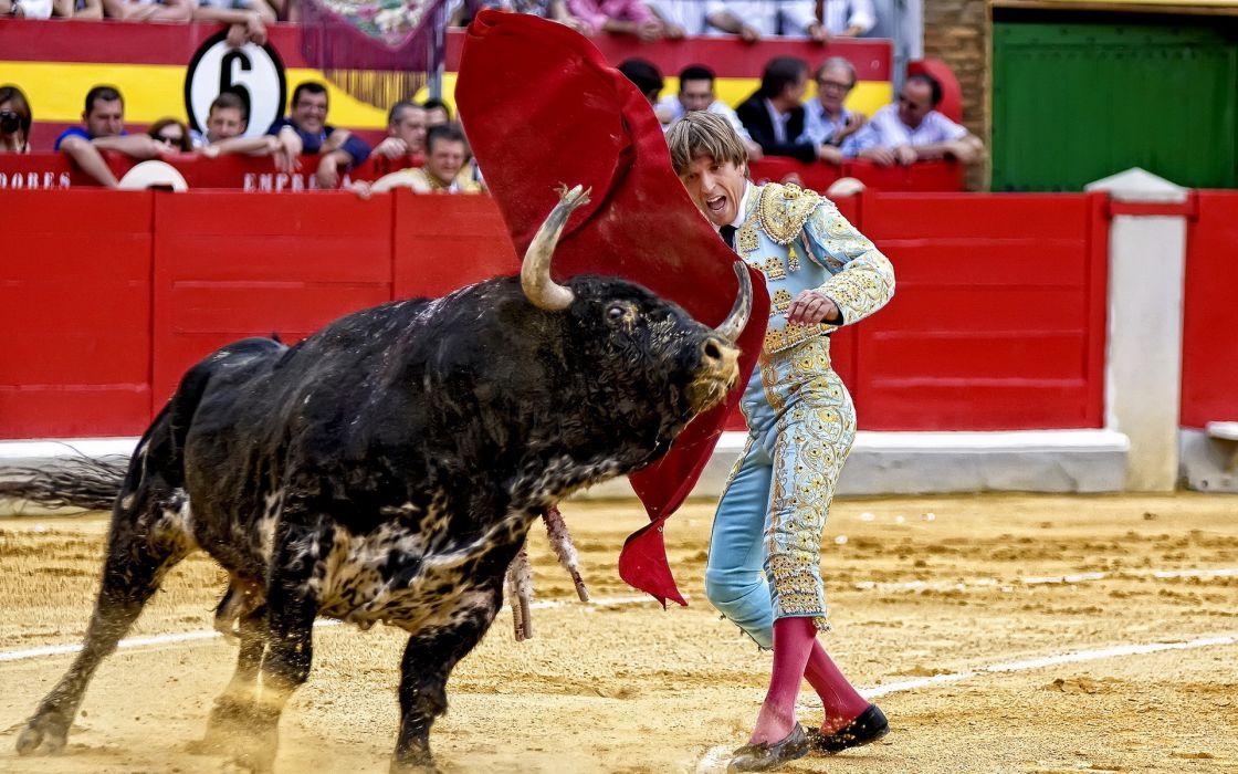 bullfighting sports men people spain spanish action animals bulls photography wallpaper