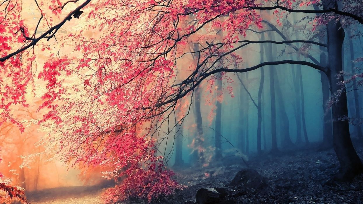 landscapes nature forests autumn fall seasons artistic paintings wallpaper