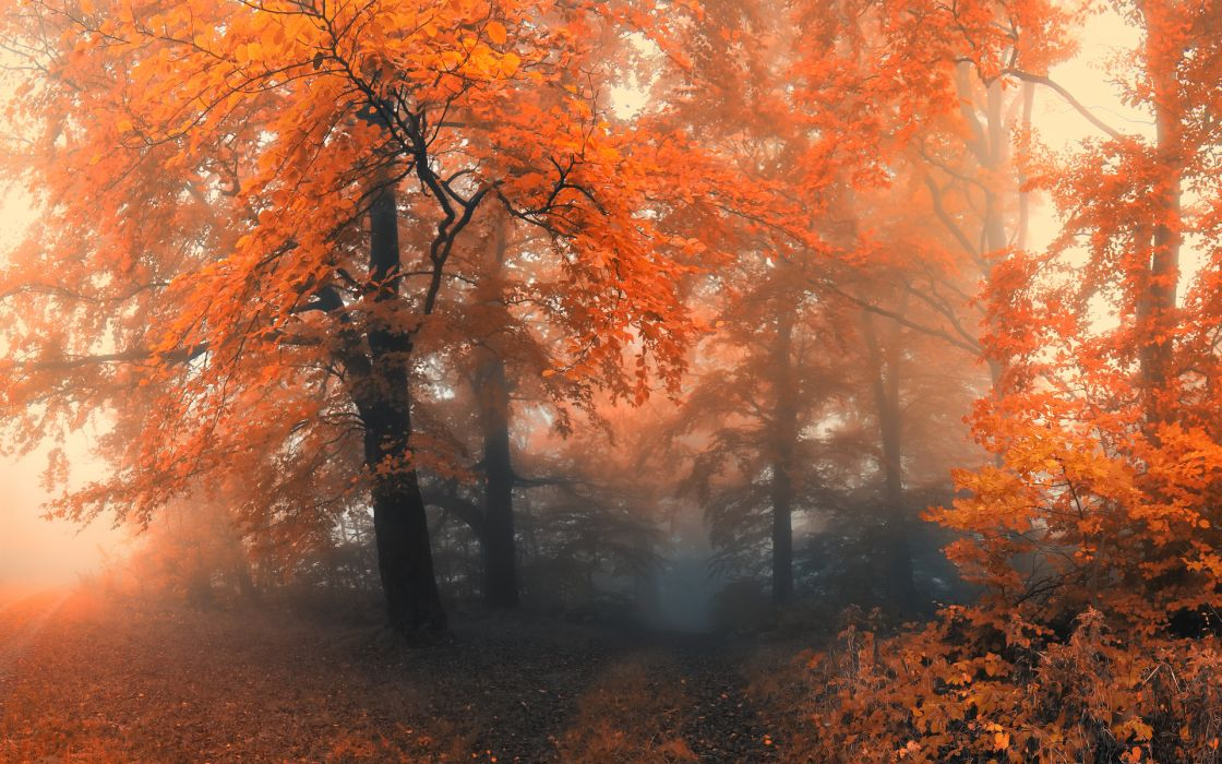 nature autumn fall seasons landscapes colors wallpaper