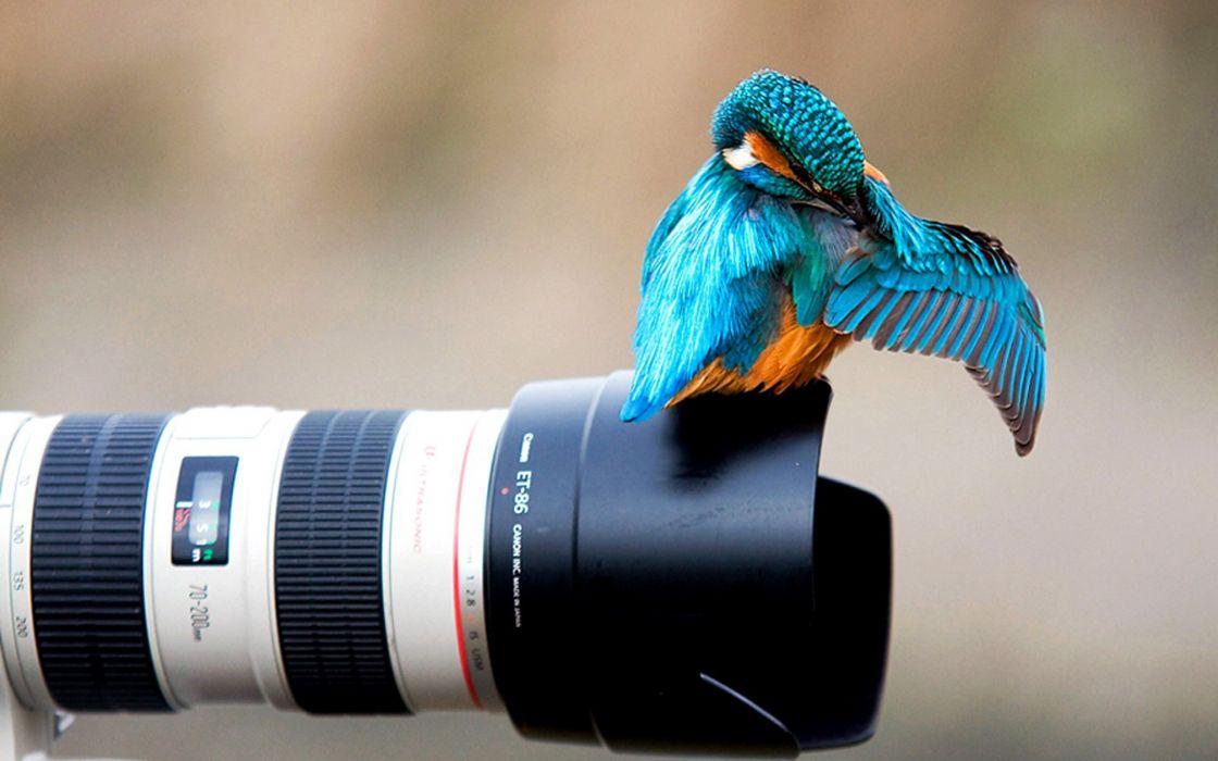Birds cameras depth of field wallpaper