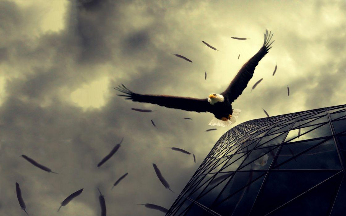 Birds eagles buildings sepia wallpaper