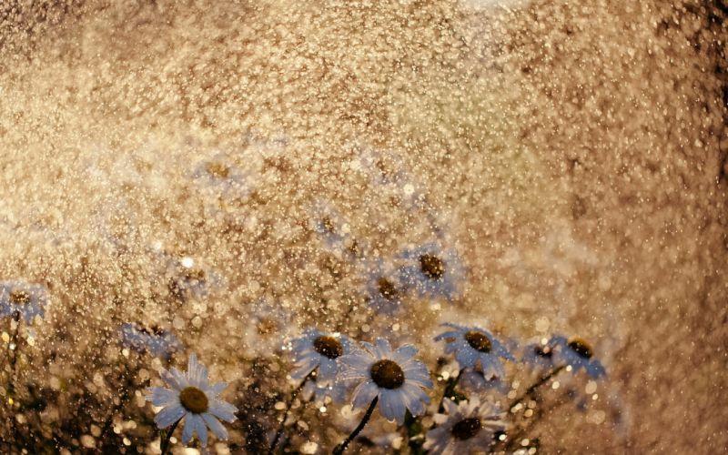 rain water-drops waterdrops storms spring seasonal flowers nature wallpaper