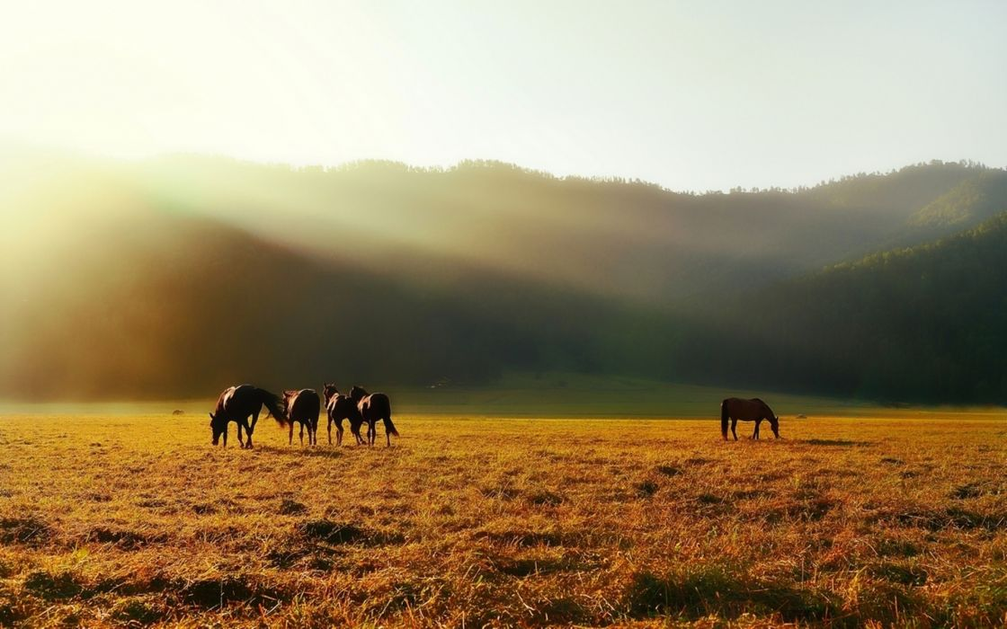 animals horses landscapes mountains fields fog mist wallpaper
