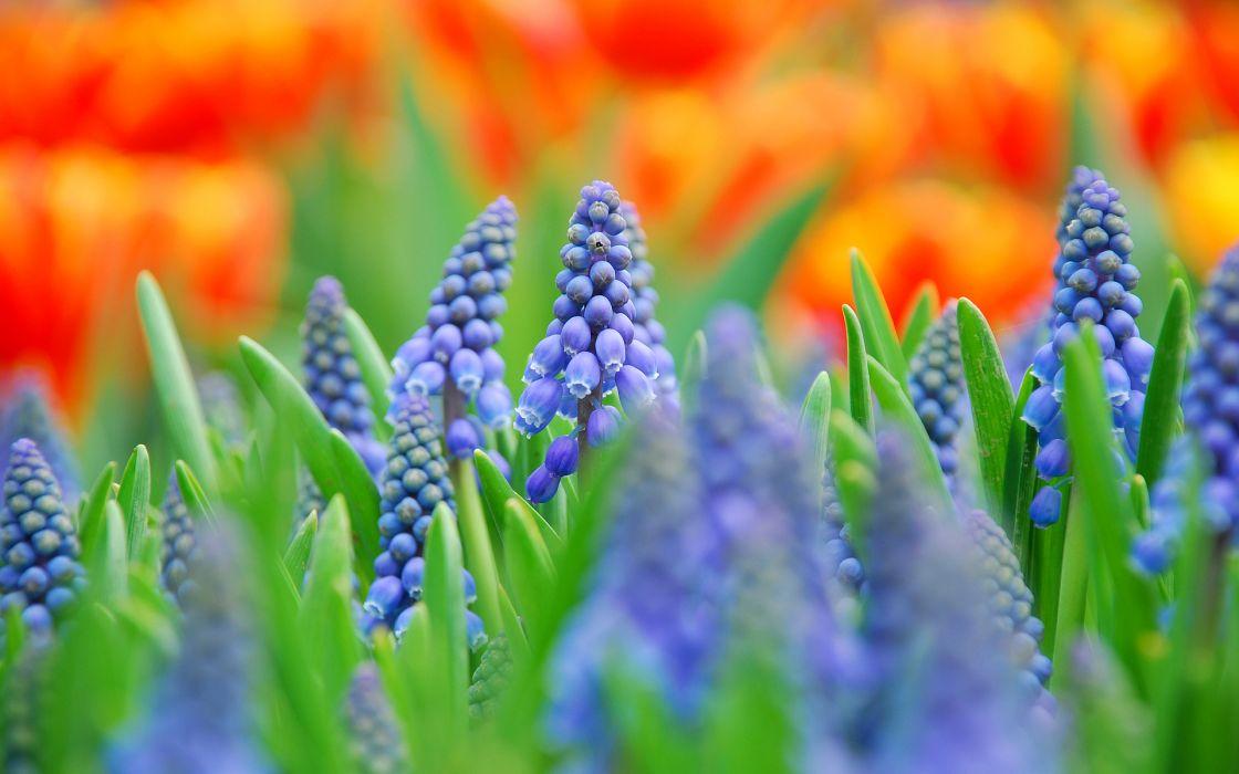 nature flowers colors macro wallpaper