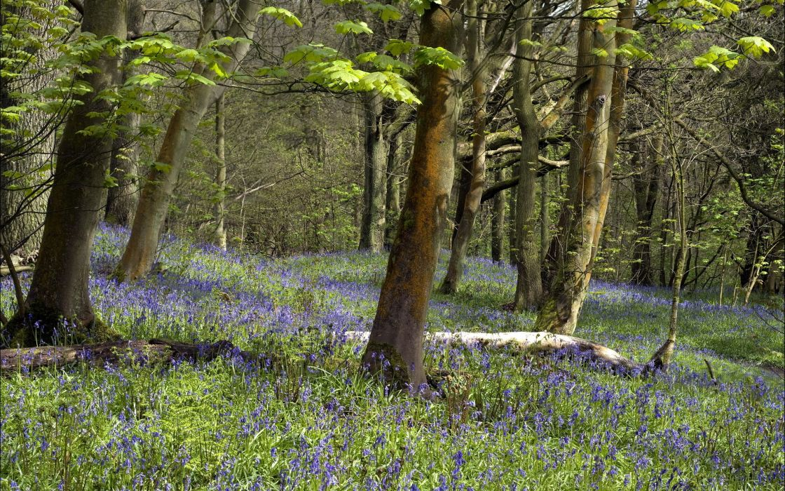 landscapes nature trees forests flowers spring seasonal wallpaper