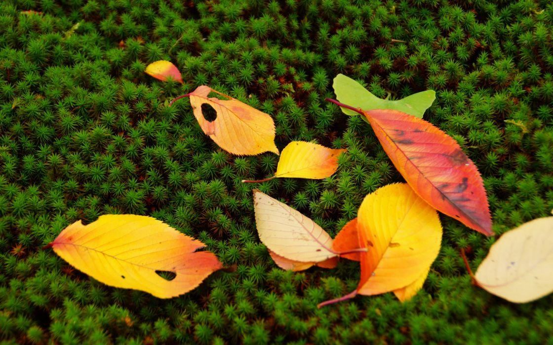 leaves autumn fall nature moss seasons colors wallpaper