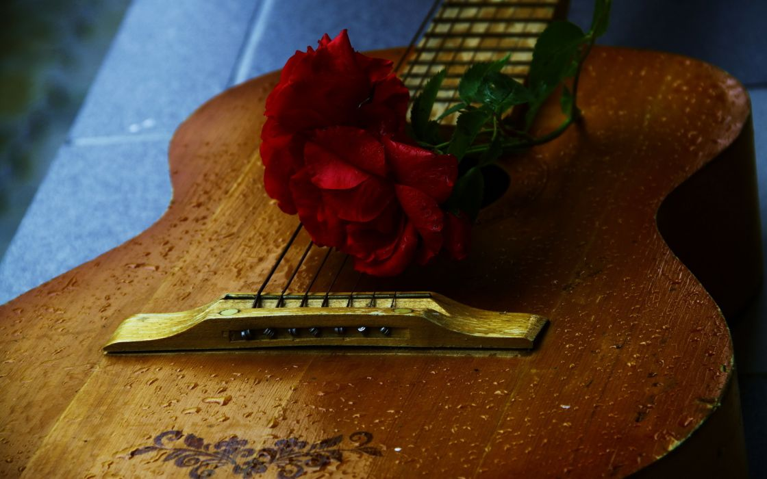 music guitars mood flowers photography roses wallpaper