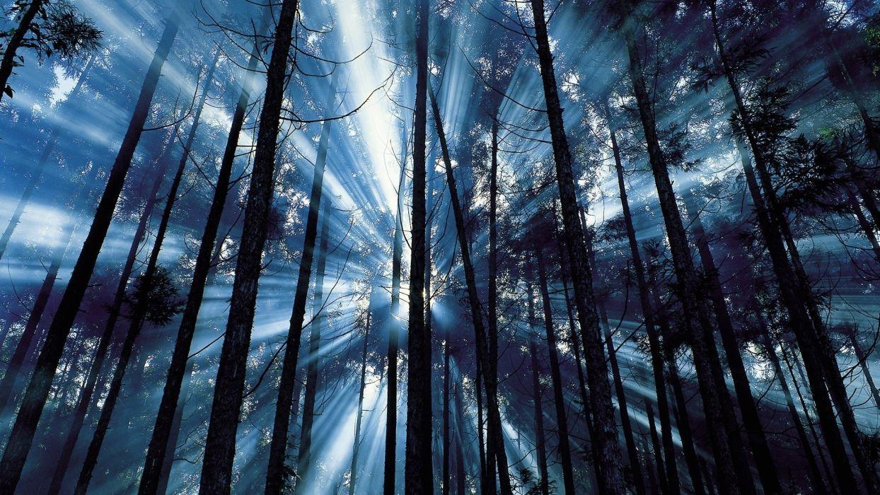 nature trees forests sun sunlight sunbeams fog mist haze filtered wallpaper