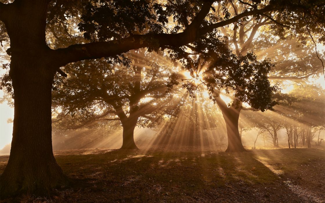 nature trees forests sun sunlight sunbeams sunsets sunrises wallpaper
