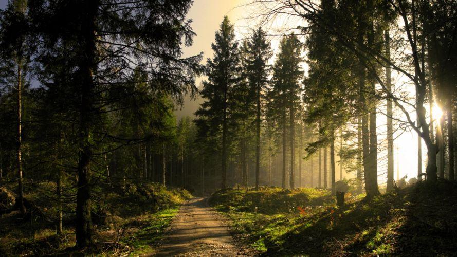 landscapes nature trees forests sunlight sunbeams sun light wallpaper