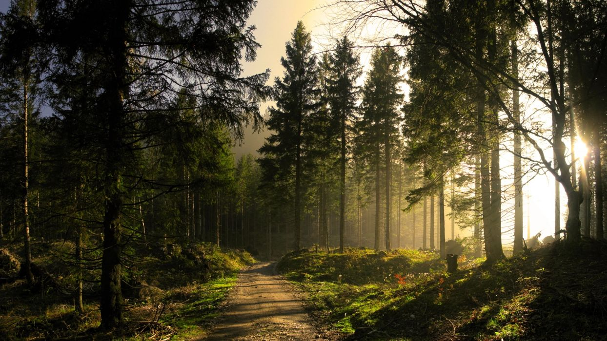 landscapes nature trees forests sunlight sunbeams sun light wallpaper