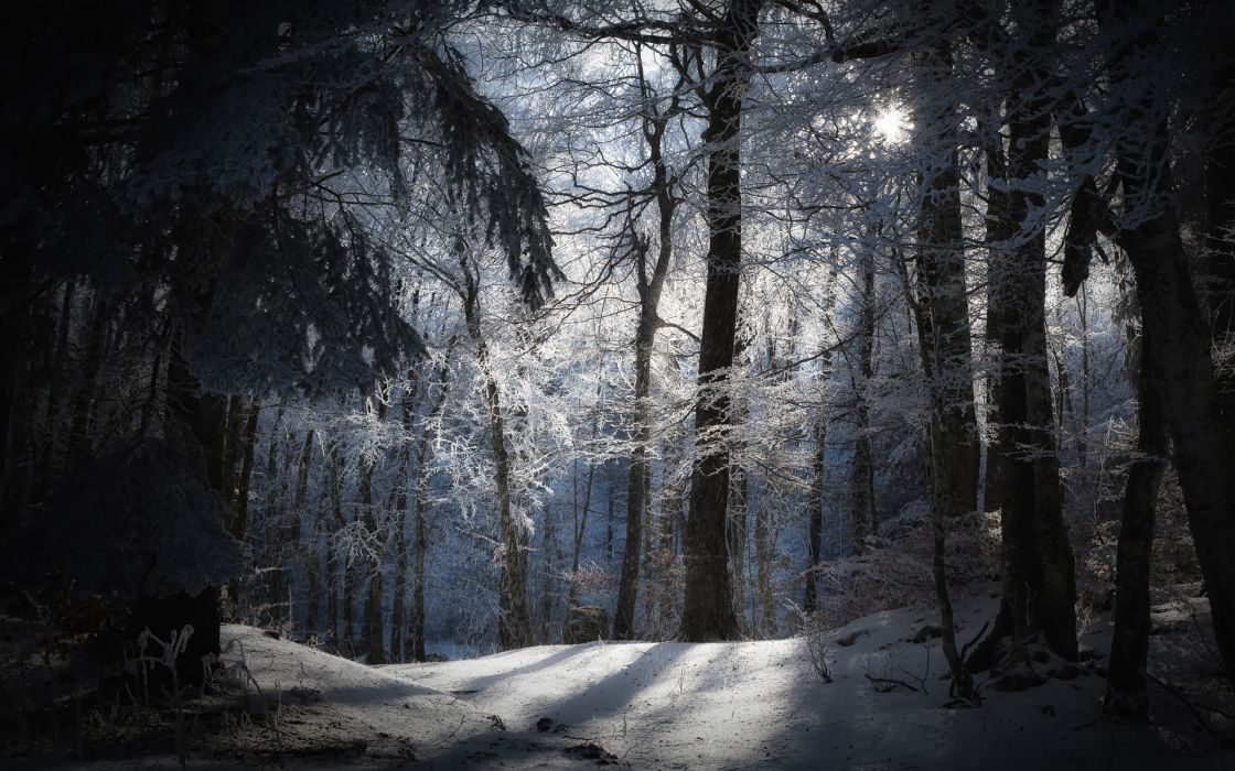 Winter nature photos