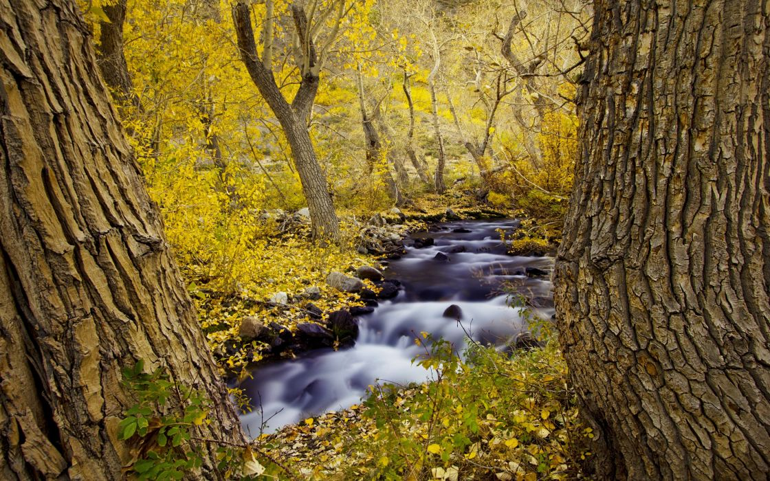 landscapes rivers streams trees forests autumn fall seasons wallpaper