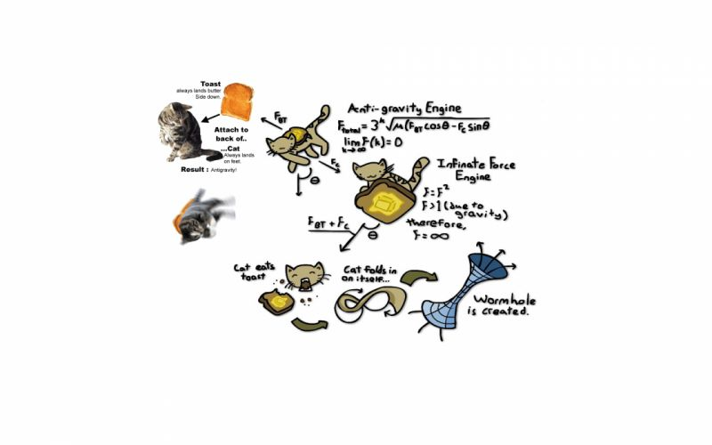 animals cats graph humor funny wallpaper