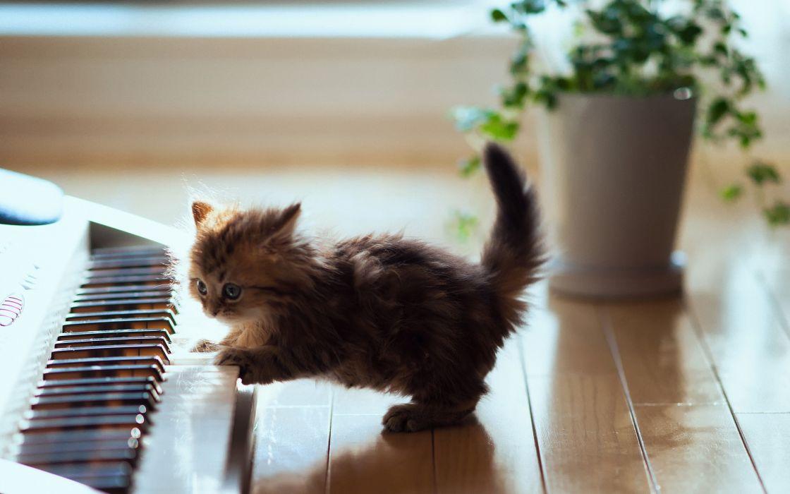 animals cats cute music wallpaper