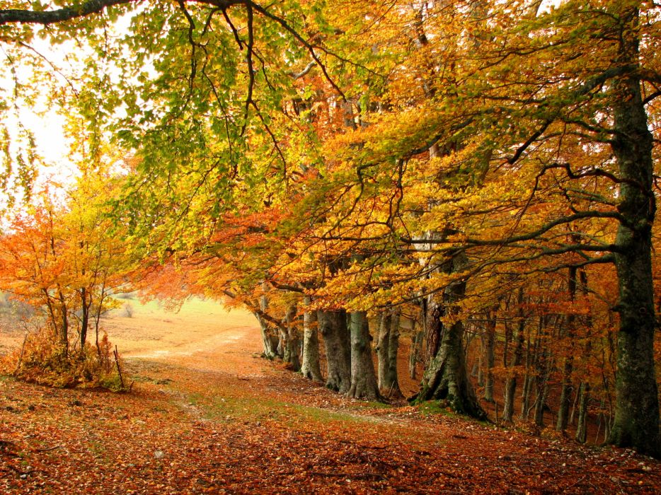 landscapes nature trees forest fall autumn seasons wallpaper