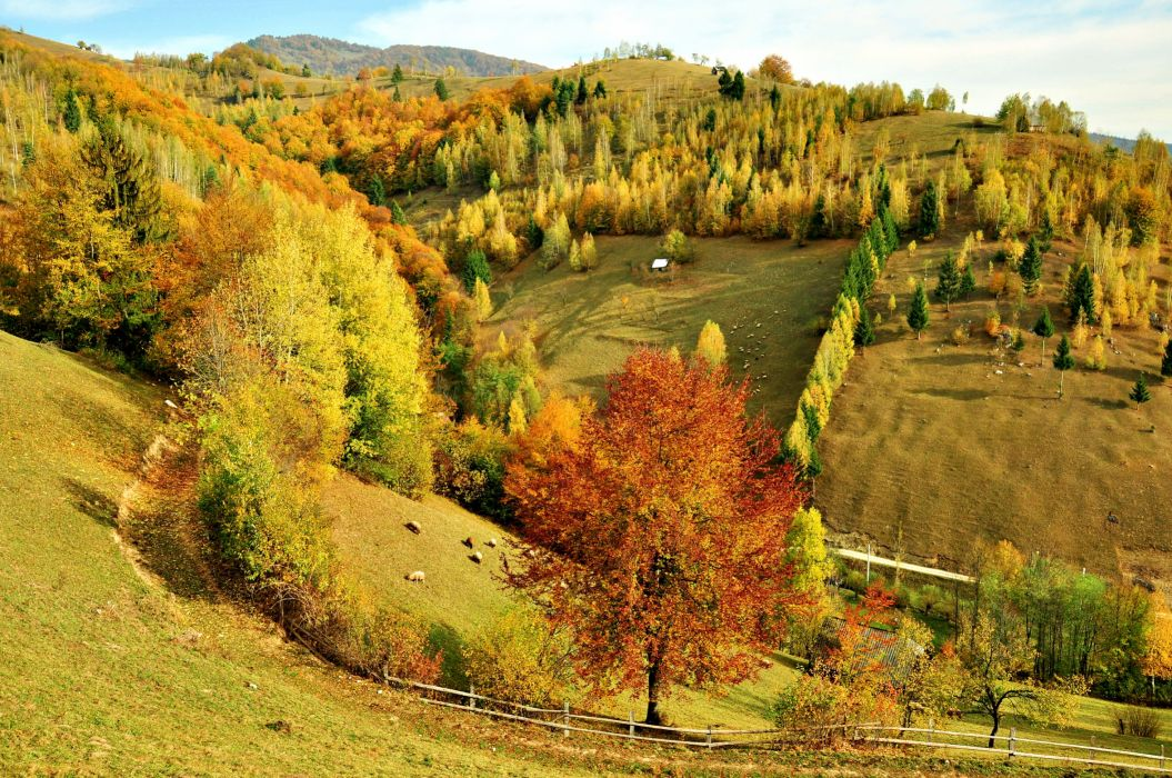 autumn fall nature trees forest hills seasons wallpaper