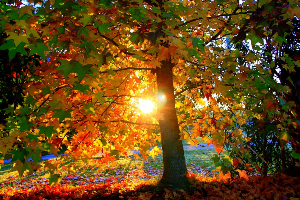 nature landscapes trees forest autumn fall seasons wallpaper