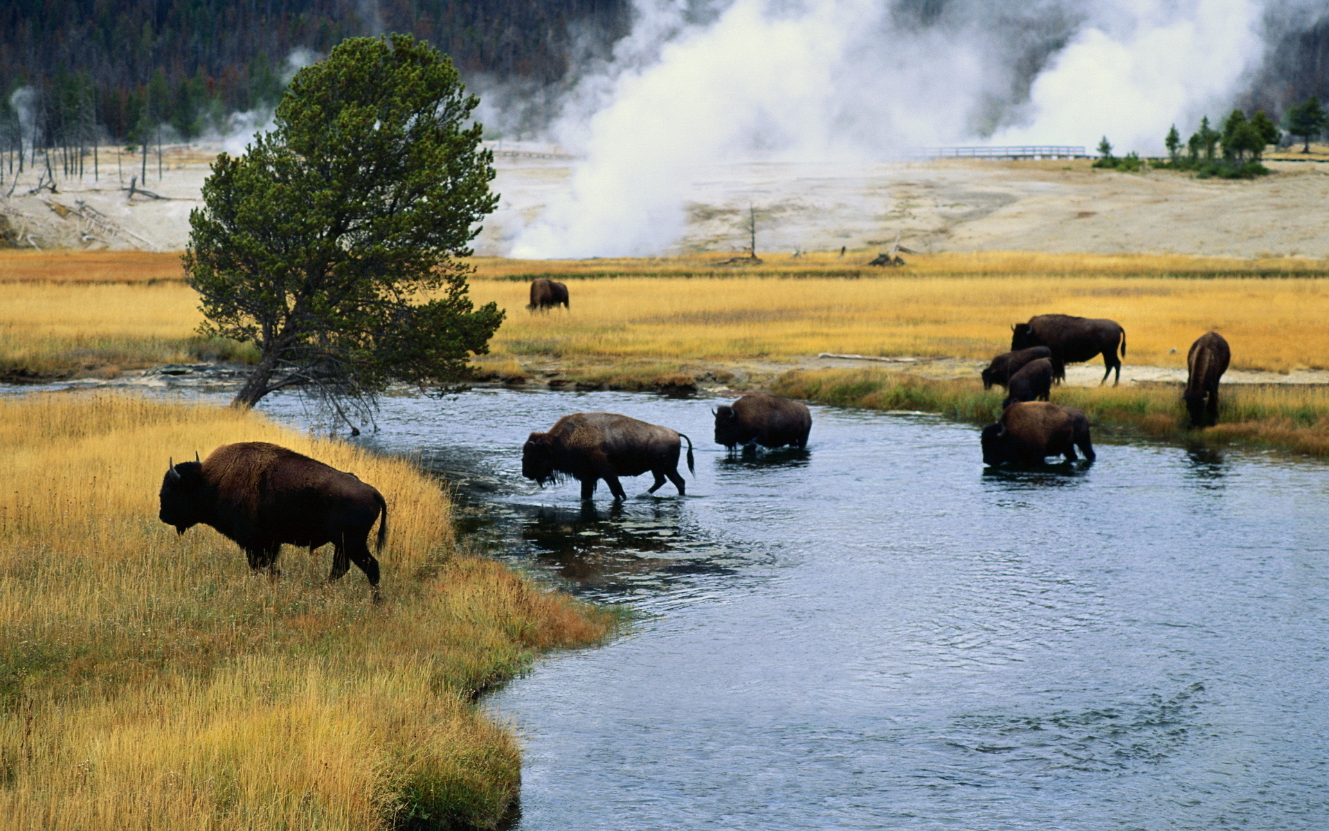 Buffalo landscapes nature rivers animals steam smoke ...