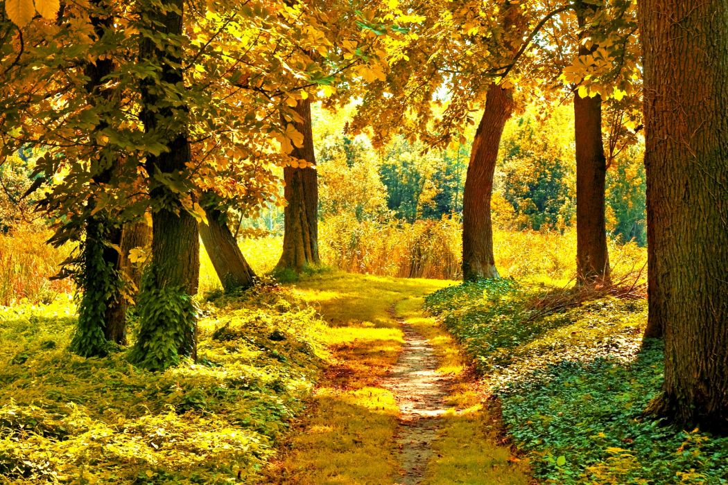 nature landscapes trees forest path pathway autumn fall seasons wallpaper