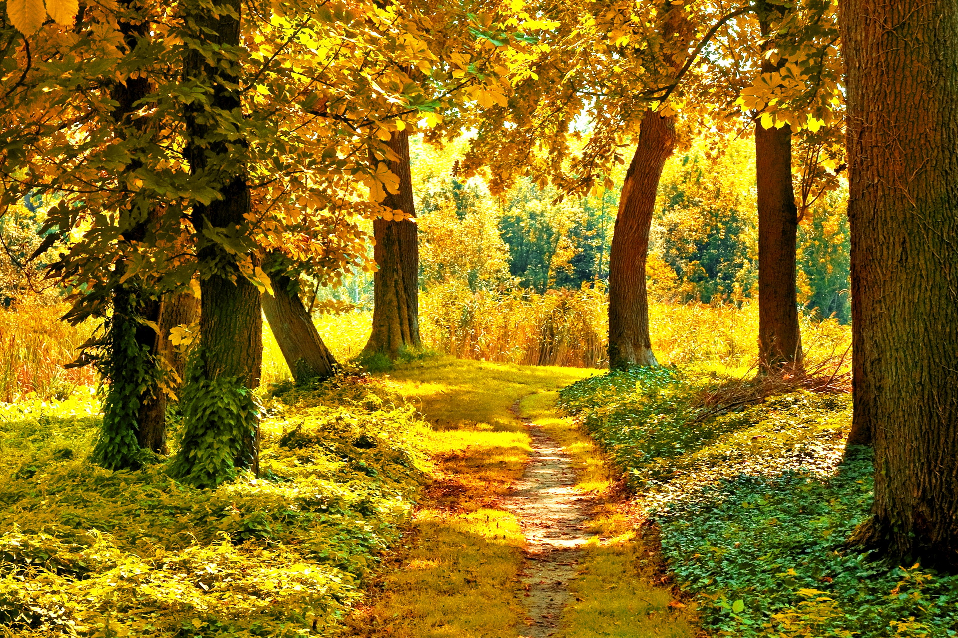 Nature landscapes trees forest path pathway autumn fall for Boden desktop