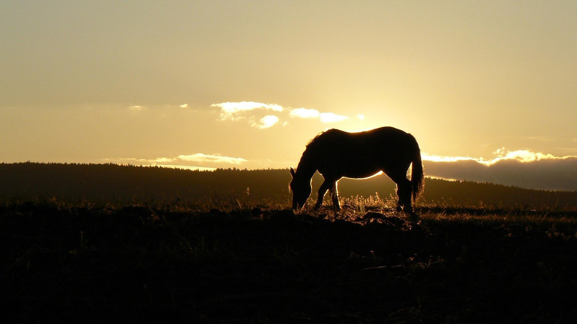 лошадь, трава, закат  № 2687 загрузить
